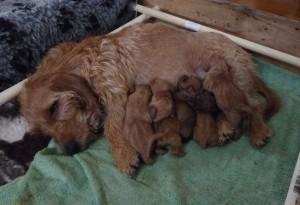 Disas med nyfödda