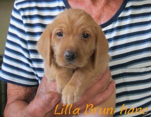 Lilla Brun