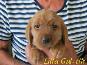 Lilla Gul